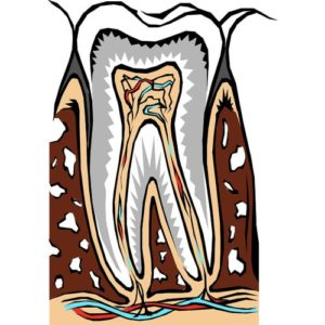 Icon showing a tooth's root system