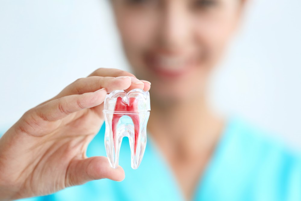 Woman holding a large tooth showing the root structure